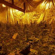Marihuana-Plantage entdeckt
